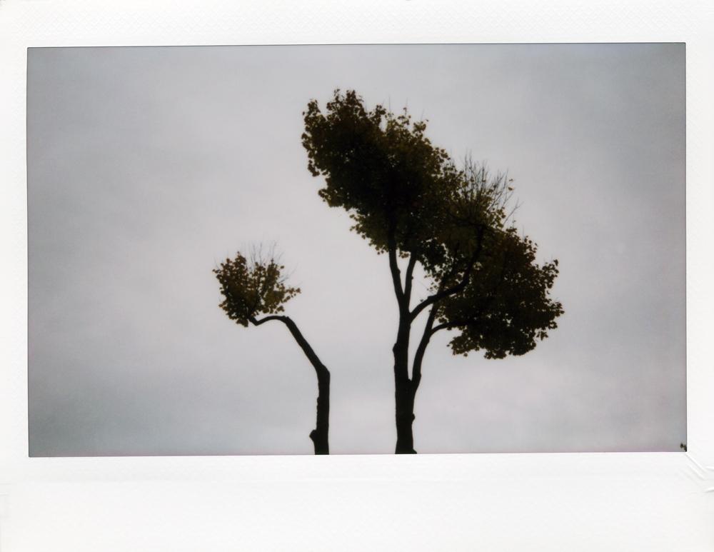Herbst010