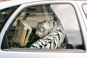 Tigre-car.jpg