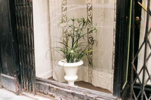 plant-window2.jpg