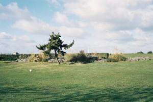 tree-alone.JPG